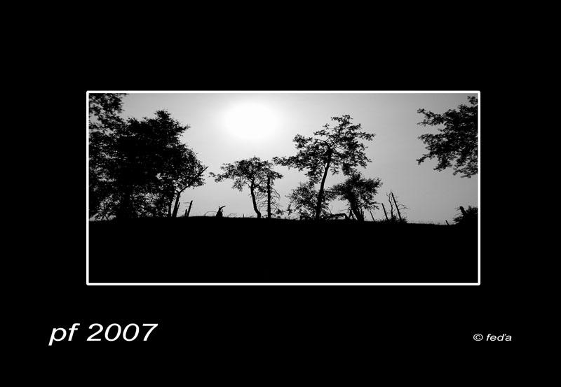 alfa_pf_2007