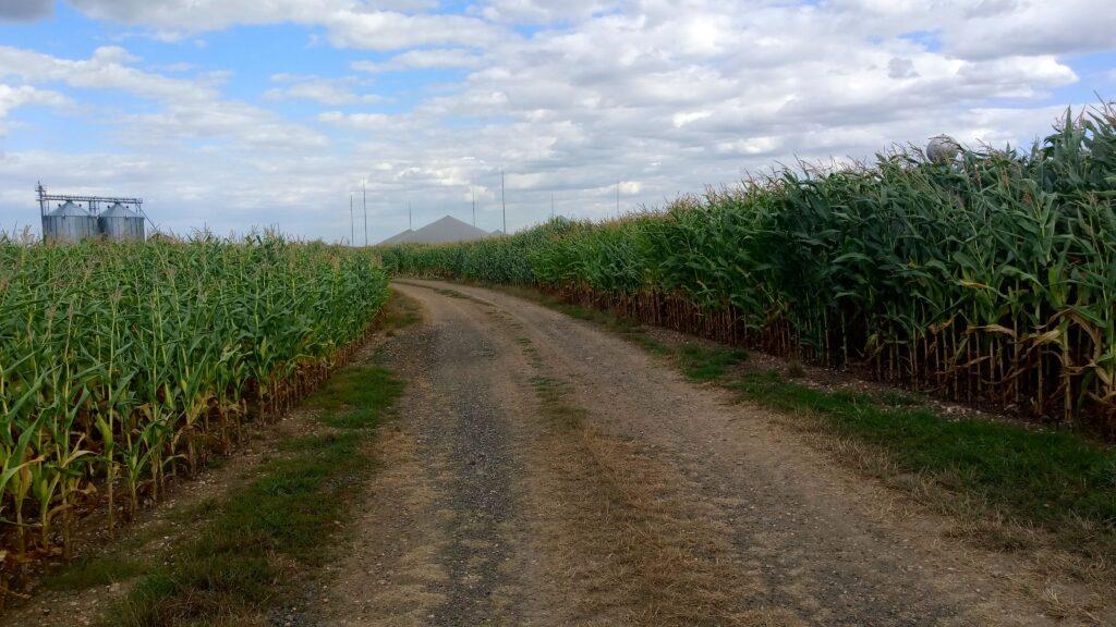 Okolo republiky - kukuřice
